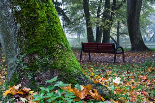 Obraz piękna jesień w parku, ławka - fototapety do salonu