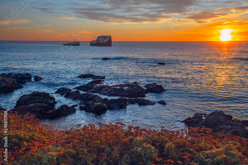 Photo  Sunset over the sea, red flowers on the beach, cloudy sky with sun setting down