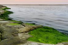 Zielone Glony Na Plaży, Morze Bałtyckie