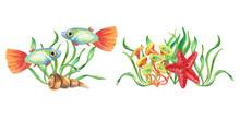 Two Watercolor Undersea Compos...