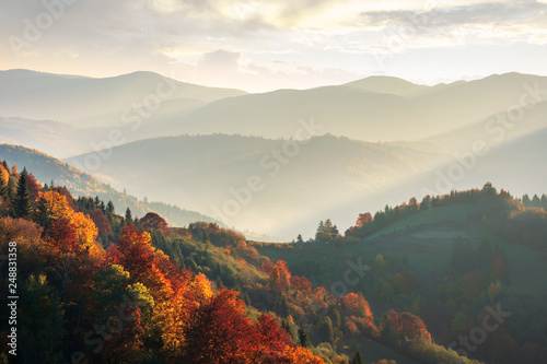 Foto auf AluDibond Schwarz beautiful autumn landscape in mountains at sunset. trees in red foliage. beams of light fall in to the valley. view from the top of a hill
