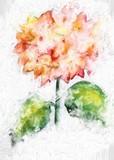 Beautiful flowers watercolor illustration