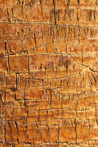 The Texture Of The Bark Of A Palm Plant The Stem Of The Tree Phoenix Buy This Stock Photo And Explore Similar Images At Adobe Stock Adobe Stock