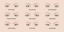 5 Basic Eyebrow Shapes. Various Types Of Eyebrows. Classic Type And Other. Vector Illustration Eyebrows With Eyes