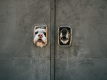 Dogs Guarding A Door Leaning Out Of Two Small Windows