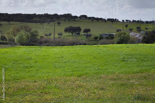 Albufeira, da Barragem -  spring meadows by the water, Avis, Portugal Canvas Print