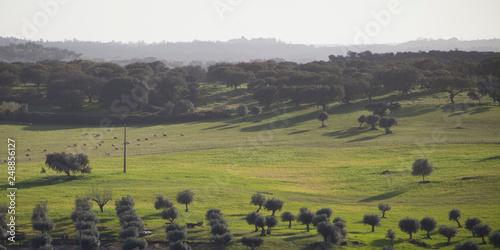 Photo Albufeira, da Barragem -  spring meadows by the water, Avis, Portugal