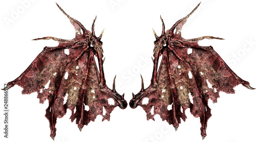 Photographie Close up on dragon wings isolated on white background. Cut out.