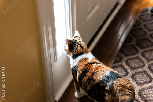 Fotografie, Tablou  Sad calico cat sitting looking through small front door window waiting for owner