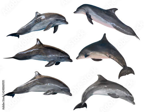 Cadres-photo bureau Dauphin isolated six grey common bottlenose dolphins