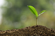 Green sprout growing out from soil on nature background