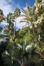 Lush Vegetation In Majorelle G...