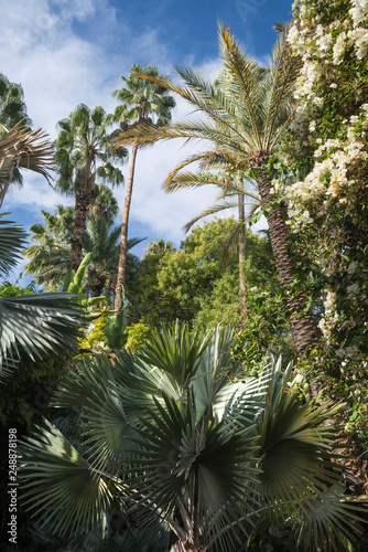 Photo Lush vegetation in Majorelle garden