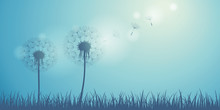 Dandelion Silhouette On Blue B...