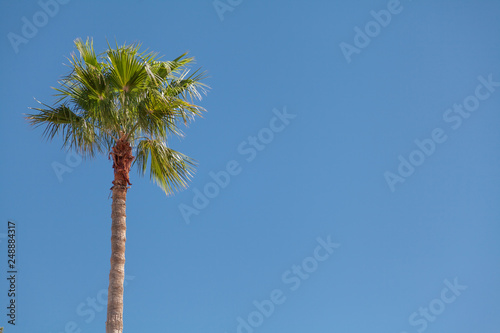 Canvas Prints Palm tree Palm tree closeup on a background of clear sky.
