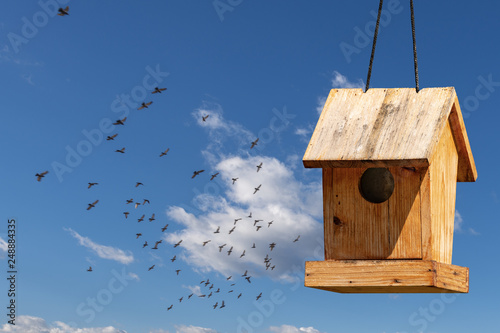 Fotografiet Wooden small birdhouse and birds in flight