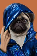 Contemporary Art Collage Portrait Positive Dog Headed Woman. Modern Style Pop Art Zine Culture Concept.