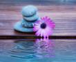 florpiedras y flor reflejadas en el agua