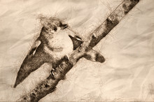 Sketch Of A Young Tufted Titmouse Perched In A Tree