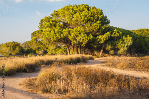 Fotografia  Beautiful view of the national natural Mediterranean reserve - a wild path betwe
