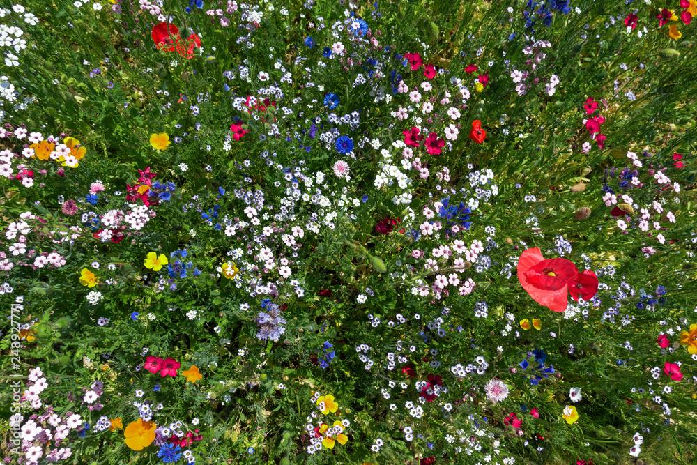 Fototapety, obrazy: Blumenbeet im Sommer mit vielen bunten Blumen schräg von oben
