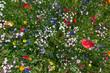 canvas print picture - Blumenbeet im Sommer mit vielen bunten Blumen schräg von oben