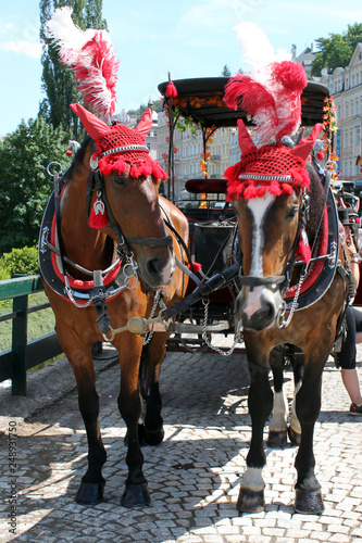 Photo  horse and carriage