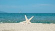 Couple starfish on sandy beach blue sea and sailboat in background