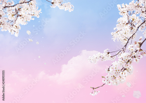Foto op Canvas Kersenbloesem Cherry blossom petal background.
