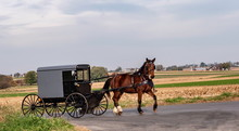 Amish Horse And Buggy 13