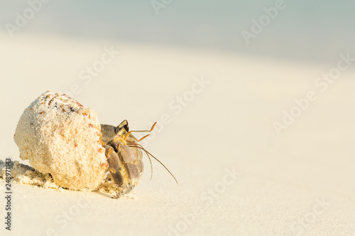 Fotomural Small hermit crab walking on sand