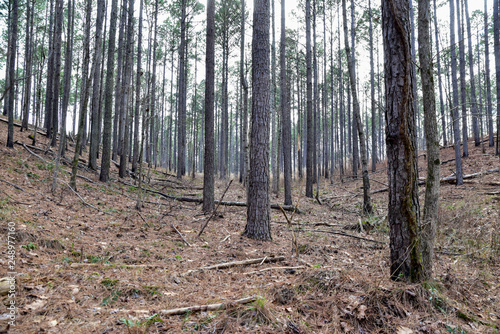 winding dirt hiking path through the words in Georgia