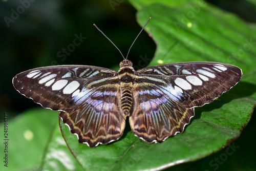 butterfly wings on green garden leaf