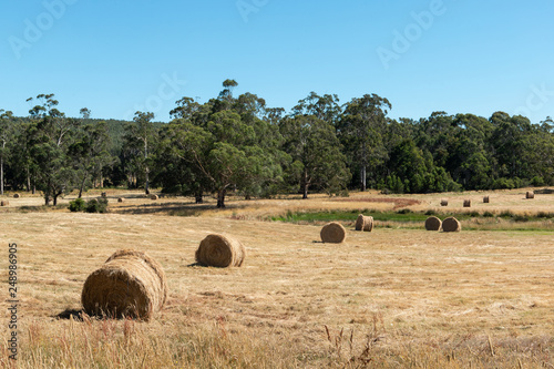 Fotografia  Roll of haystacks in a dry field with clear blue sky.