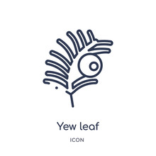 Yew Leaf Icon From Nature Outline Collection. Thin Line Yew Leaf Icon Isolated On White Background.