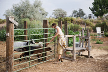 Young Woman Opens Gate To Goat...