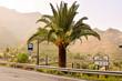 European natural countryside in Agaete Gran canaria