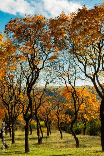 Aluminium Prints Autumn Beautiful romantic alley in a park with colorful trees, autumn landscape. Georgia