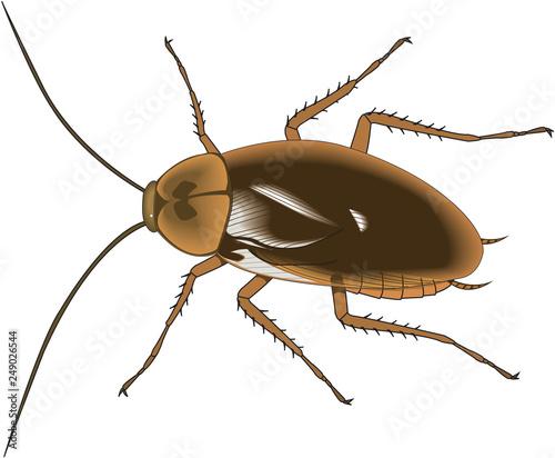 American Cockroach Vector Illustration