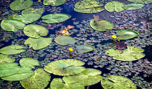 The Surface Of The Lake With Water Lilies. 3D-visualization.