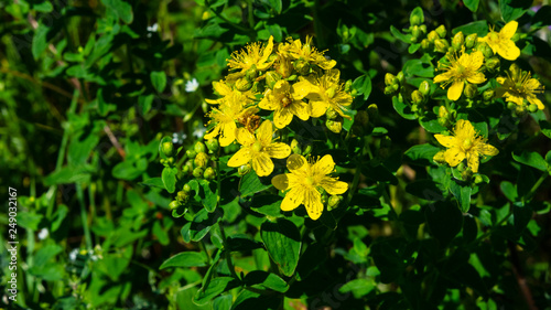 Fotografie, Obraz  Yellow St
