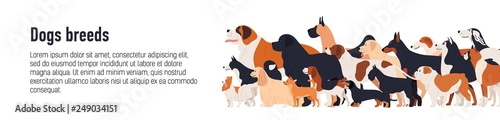 Fototapeta Horizontal web banner template for conformation dog show with adorable doggies of different breeds and place for text. Colorful vector illustration in flat cartoon style for event announcement. obraz