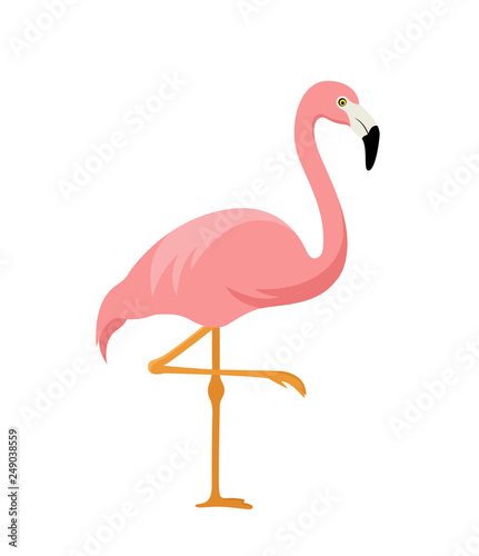 Fotografie, Obraz pink flamingo isolated on white background