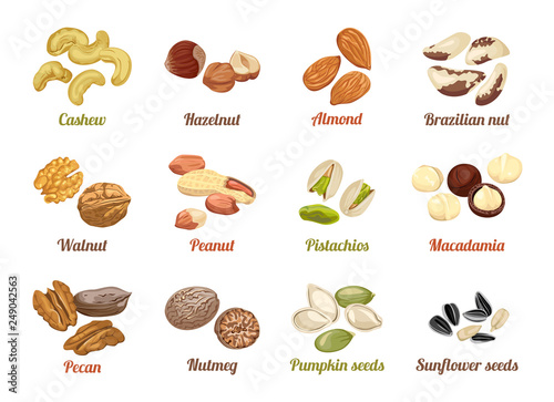 Cuadros en Lienzo Set of named vector icons nuts and seeds