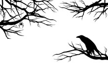 Spooky Raven Bird Among Bare Tree Branches With Spider - Halloween Theme Black Vector Silhouette Design Set