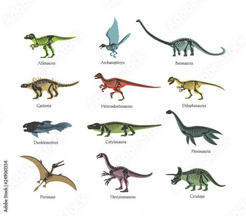 Photo Skeletons ancient prehistoric predatory dinosaurs