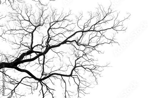Photo Silhouette tree