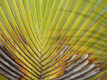 Detail Of Palm Tree, Trunk Detail Fo Palm Tree Zigzag With Shadow