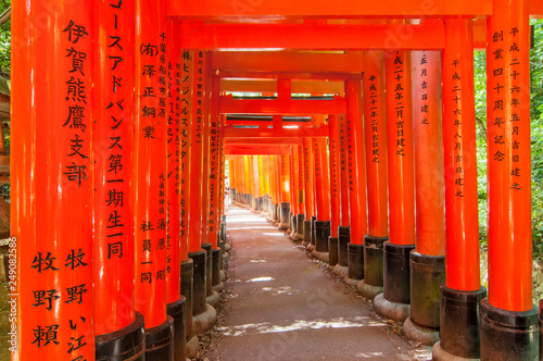 Torii gates in Fushimi Inari Shrine, Kyoto, Japan.