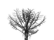 Silhouette Dry Palm Tree